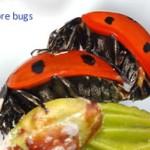 morebugs